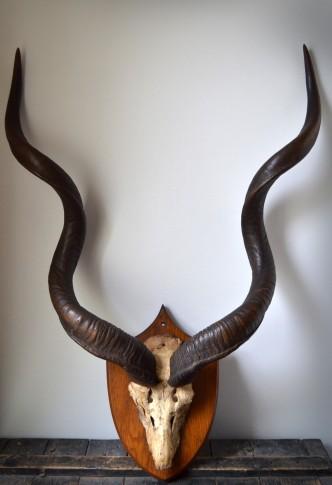 Antique wicker chair - African Kudu Horns Vintro